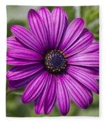 Lovely African Daisy - Osteospermum Fleece Blanket