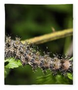 Lymantria Dispar Gypsy Moth Larva Fleece Blanket