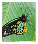 Male Cairns-birdwing Butterfly Fleece Blanket