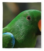 Male Eclectus Parrot Fleece Blanket