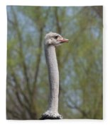 Male Ostrich Fleece Blanket