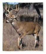 Male White-tailed Deer Fleece Blanket
