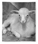 Marys Little Lamb... Or Kid In Black And White Fleece Blanket