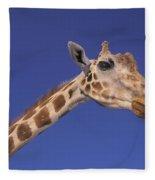 Masai Giraffe, Serengeti, Africa Fleece Blanket