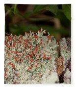 Matchstick Lichen Fleece Blanket