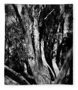 Melaleuca Tree Fleece Blanket