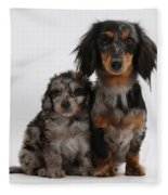 Merle Dachshund And Doxie Doddle Pup Fleece Blanket