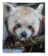 Mischievious Red Panda Fleece Blanket