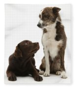 Mixed Breed And Chocolate Lab Fleece Blanket