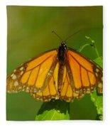 Monarch On Hackberry Fleece Blanket