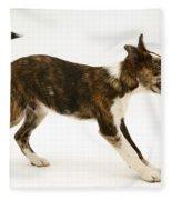 Mongrel Pup Fleece Blanket