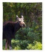 Moose Baxter State Park 4 Fleece Blanket