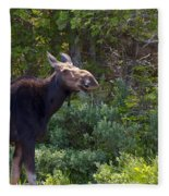 Moose Baxter State Park Maine 3 Fleece Blanket
