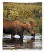 Moose Drinking In A Pond, Tombstone Fleece Blanket