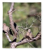 Mourning Dove - Board Of Directors Fleece Blanket