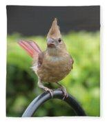 Mrs Cardinal Fleece Blanket