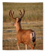 Mule Deer Buck In An Alberta Field Fleece Blanket