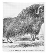 Musk Ox Fleece Blanket