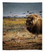 Muskox Ovibos Moschatusin The Northwest Fleece Blanket