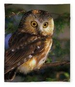 Northern Saw-whet Owl Fleece Blanket
