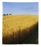 Oat Crops On A Landscape, County Dawn Fleece Blanket