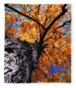 Old Elm Tree In The Fall Fleece Blanket