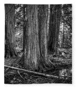 Old Growth Cedar Trees - Montana Fleece Blanket