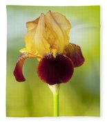Old Time Two Toned Burgundy And Gold Iris Fleece Blanket