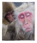 Older Snow Monkey Being Groomed By A Fleece Blanket