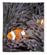 Orange Clownfish In An Anemone Fleece Blanket