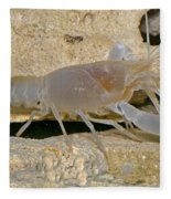 Orange Lake Cave Crayfish Fleece Blanket