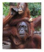 Orangutans Fleece Blanket