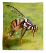 Oriental Fruit Fly Laying Eggs Fleece Blanket