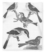 Ornithology, 19th Century Fleece Blanket