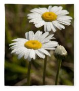 Ox-eye Daisy Wildflowers Drenched In Dew Fleece Blanket