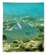 Pacific Chub 1080113.jpg Fleece Blanket