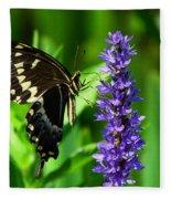 Palamedes Swallowtail Butterfly Fleece Blanket