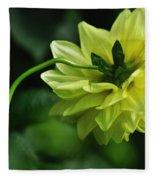 Pastel Lemon Dahlia 2 Fleece Blanket