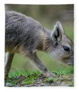 Patagonian Cavy Youngin Fleece Blanket