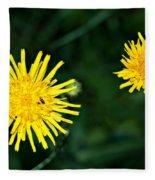 Perennial Sow-thistle Fleece Blanket