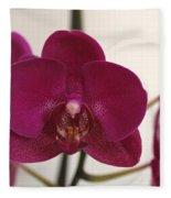 Pink Phalaenopsis Orchid  Fleece Blanket