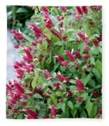 Pink Shrimp Plant Fleece Blanket