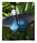 Pipevine Swallowtail Din003 Fleece Blanket