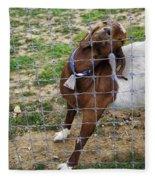 Please Exonerate Me 2 - Billy Goat Fleece Blanket