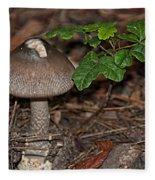 Point Lobos Park  Fleece Blanket