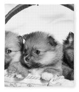 Pomeranian Fleece Blanket