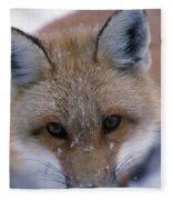 Portrait Of Adult Red Fox Fleece Blanket