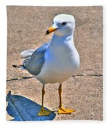 Posing Gull Fleece Blanket