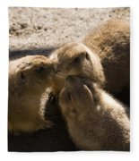 Prairie Dog Gossip Session Fleece Blanket
