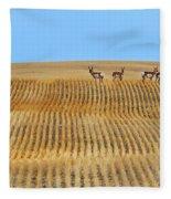 Prairie Pronghorns Fleece Blanket